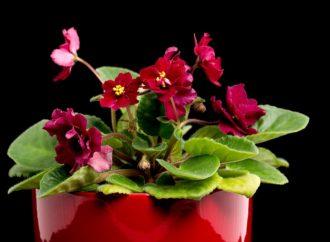 Ożywiłam ciemne zakątki – kwiaty